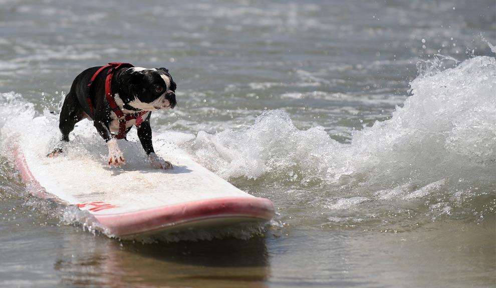 DogSurf